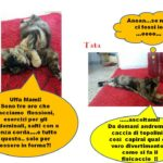 Fitness felino- gattina