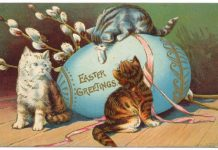 easter-cute-cat