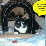 Milly , una belva sensibile